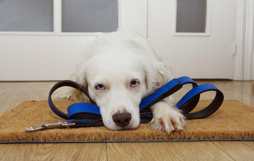Perro con correa en la puerta esperando a que le saques como ejemplo de si quieres acordarte ponlo en la puerta