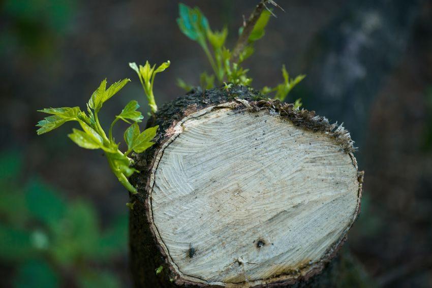 Brotes verdes como ejemplo de XVI Jornadas OPTIMA LAB: Volver a empezar